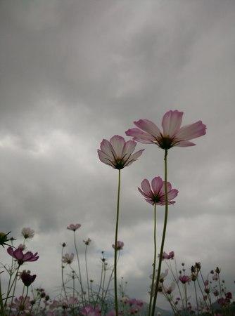 booming flowers 写真素材