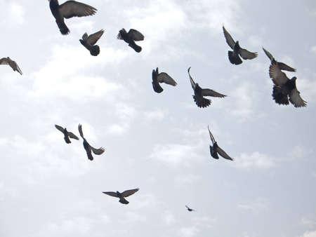 palomas volando: Palomas en el cielo
