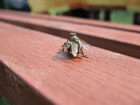 multiplying: Fly couple in love