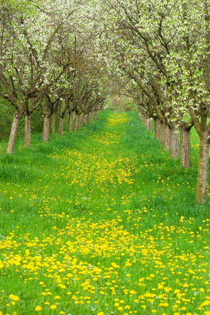 Apple orchard photo
