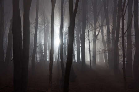 Sun beams in fogy and scary forest photo