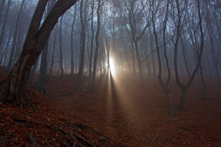 spooky forest: Sun beams in fogy and scary forest Stock Photo