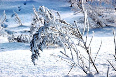 Stalks of burdock with its spines bend down under the snow weight. The snow crystals sparkle white and blue.