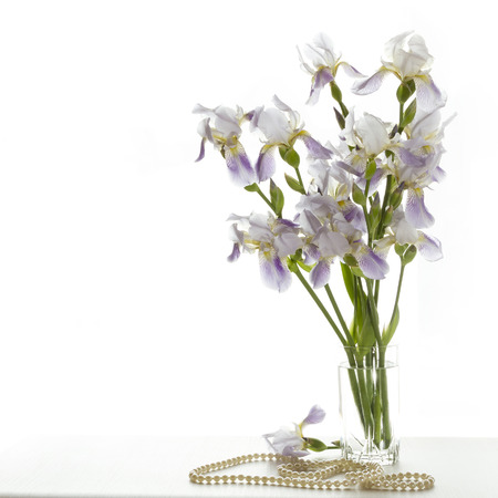 Delicate lilac iris on a white background. Flowers for the beloved photo