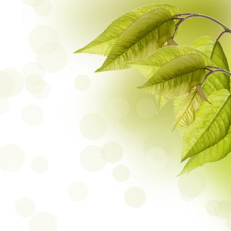 Zweig mit grünen Blättern und Sonnenstrahlen Bereich für Text