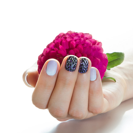 Hand with manicure holding red flower on a white background.