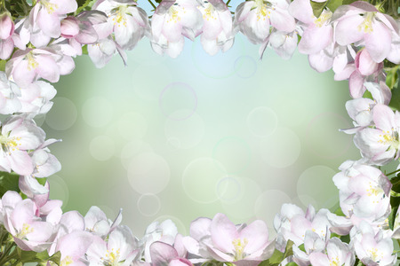 apple blossom: Blooming apple tree against the sky. Space for text.