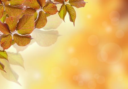 blackberries: Autumn leaves blackberries on a yellow background