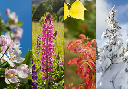 fall winter: Four bright seasons - spring, summer, autumn, winter. Stock Photo