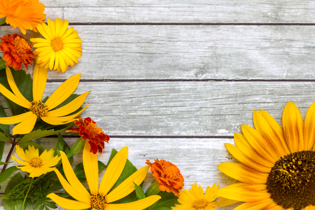 Yellow and orange flowers on a wooden background. Space for text.