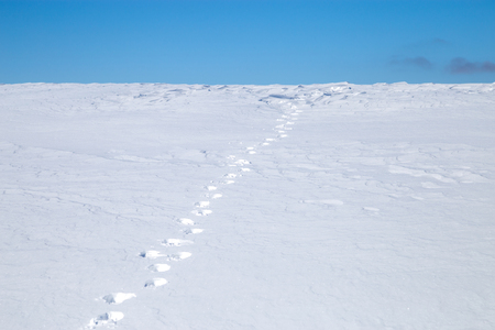 Footprints in the snow field that go beyond the horizon.