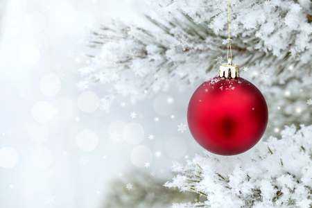 Red Christmas balls on a pine branch covered with frost. Stock Photo