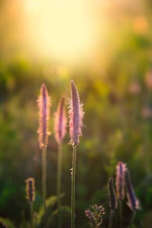 Pink flowers in the rays of the setting sun. Stok Fotoğraf