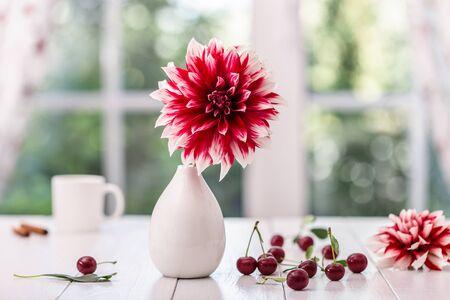 Dahlia in a vase against the window. Foto de archivo