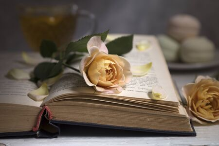 Still life with delicate roses and books.