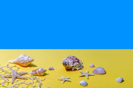Image with seashells.