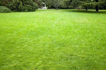 Green grass background texture straight Reklamní fotografie