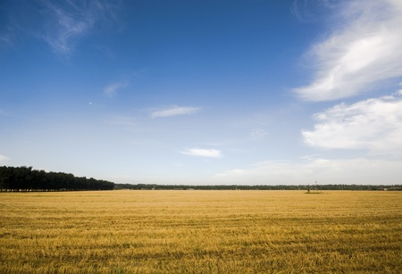 wheatfield: After the wheat harvest field and blue sky with some clouds Stock Photo