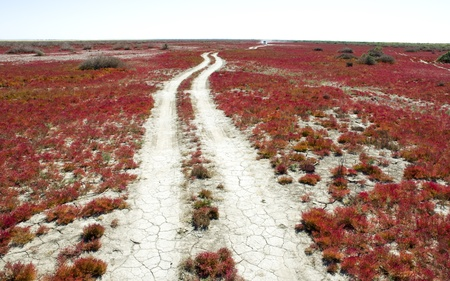 Road through the red vegetation photo