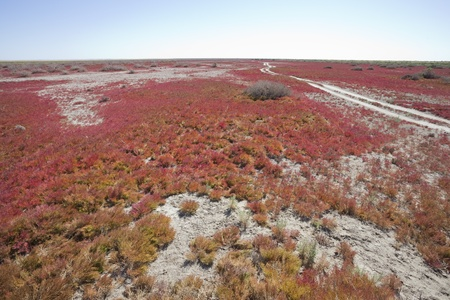 Red vegetation photo