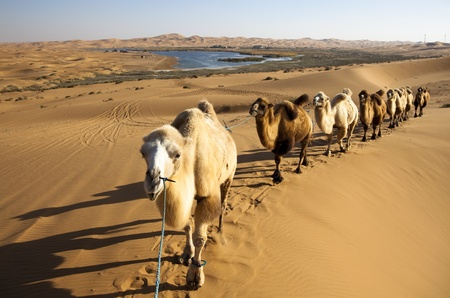 climatic: Sand desert ,china