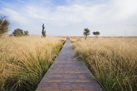 convey: The path along the cliff reed