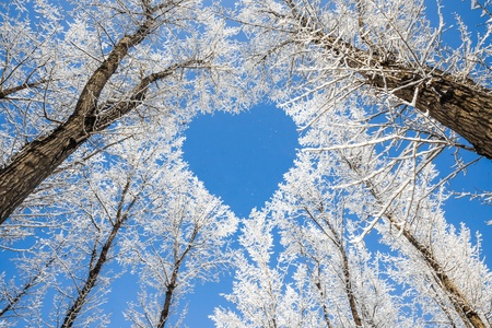 falling in love: Winter landscape,branches form a heart-shaped pattern