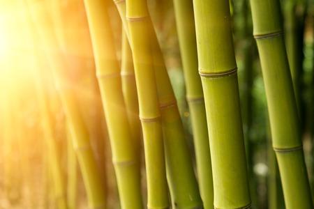 Foresta di bambù Archivio Fotografico - 23668028