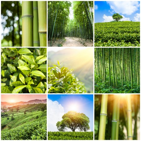 Collage of photos with bamboo forest and plantation photo