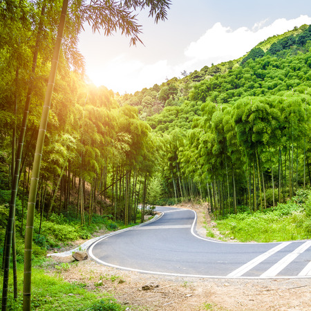 bamboo forest: Road through the bamboo forest