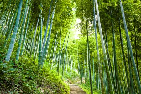 bambou: Forêt de bambous et une passerelle Banque d'images
