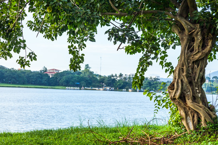 rive: The river green trees and grass of hue in Vietnam