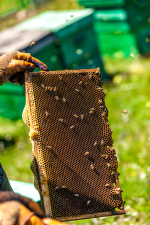 Beekeepers collect honey