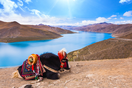 Yak at blue lake in Tibet Banco de Imagens