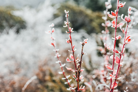 Frozen plants on mountain of China