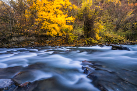 river and yellow leaf in fall Reklamní fotografie - 123024033