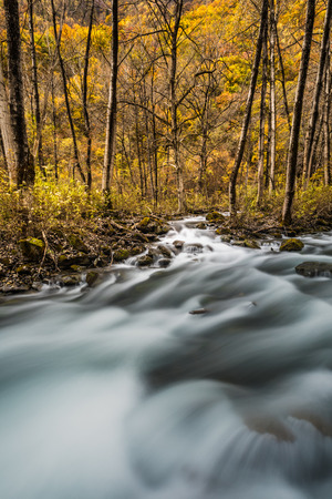 river and yellow leaf in fall