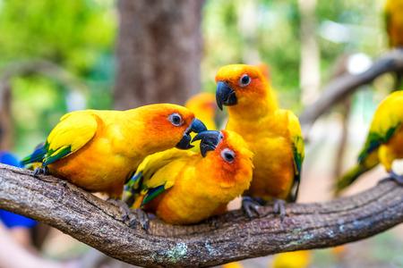 parrot standing on tree in zoo Reklamní fotografie - 123026240