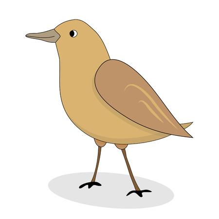 bird nightingale: Cartoon nightingale bird vector. Luscinia luscinia, nightingale illustration