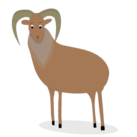 bighorn: Urial animal character. Nature mammal ram with horns. Vector illustration
