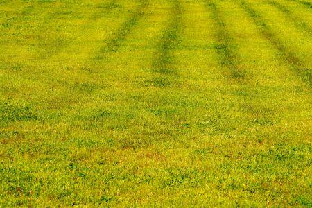 Yellow-green lawn. Shorn lawn. Front view Stok Fotoğraf - 126591862