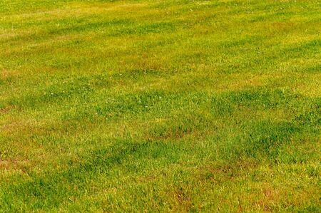 Yellow-green lawn. Shorn lawn. Front view Stok Fotoğraf - 126591910