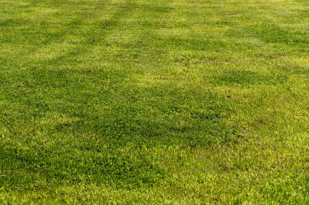 Yellow-green lawn. Shorn lawn. Front view