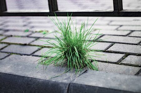 A bunch of green grass on a gray sidewalk. Concept. Front view from above.