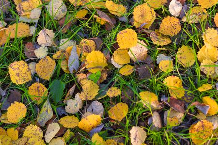 Multi-colored and yellow fallen leaves on autumn still green grass in a city park. Textured background. View from above. Stok Fotoğraf - 133322411