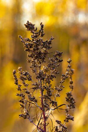 Autumn. A dried plant against a background of orange vegetation. Vertical shot. Front view. Stok Fotoğraf