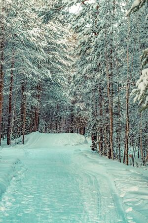 The road in the winter Siberian forest.