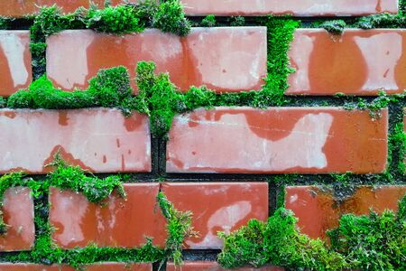 Bricks and moss. Green and red. Front view. Nature.