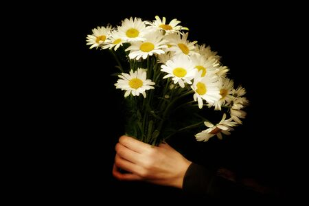 Front view. bouquet of daisies in hand on a black background
