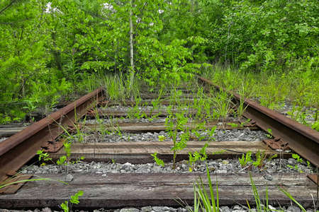 Railroad track winding through forest Stok Fotoğraf